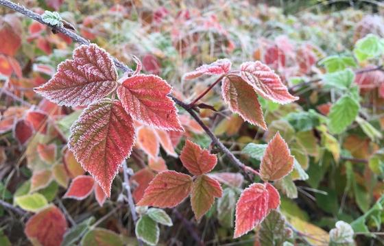 Herbstzucker_IMG_1114_7